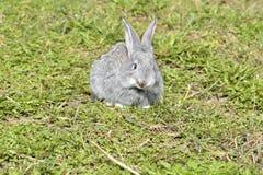 Mali króliki siedzi outdoors w wiośnie Obraz Stock