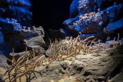 Mali kraby i denni anemony przy portem Nagoya społeczeństwa akwarium obrazy royalty free