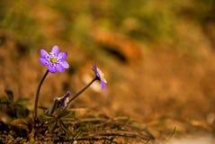 mali kwiatów drewna Zdjęcia Stock