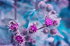 Mali kwiatonośni purpurowi kwiaty w miękkiej ostrości Fotografia Stock