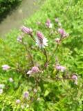 Mali kwiaty zdjęcie royalty free