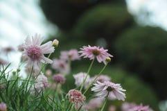 Mali kwiaty Fotografia Royalty Free