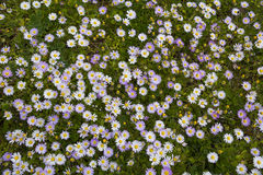 Mali kwiaty Fotografia Stock