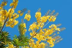 Mali kwiaty i liście dzikie rośliny pole w Urugwaj zdjęcia royalty free