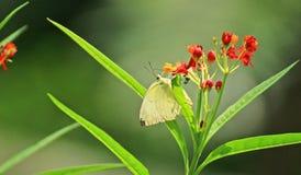 Mali kwiaty i motyl w ogródzie Fotografia Royalty Free