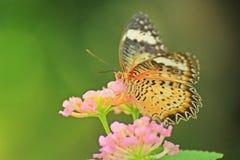 Mali kwiaty i motyl w ogródzie obraz stock