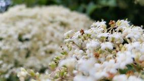 Mali kwiaty na drzewie Fotografia Royalty Free
