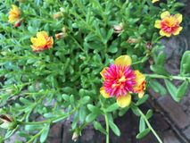 Mali kwiaty outdoors Fotografia Stock