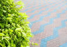 Mali liście ornamentacyjny drzewny i betonowi bloki posadzkowi obraz royalty free