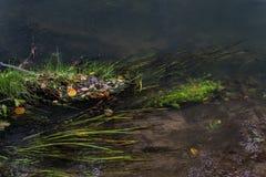 Mali liście w jesieni na nawadniają powierzchnię Fotografia Royalty Free