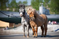 mali miasto konie Obraz Royalty Free