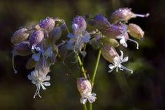 Mali okwitnięcia łąka kwiat Zdjęcia Stock
