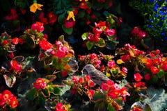 Mali ptaka i czerwieni kwiaty obrazy royalty free