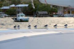 Mali ptaki na panelu słonecznym Fotografia Stock