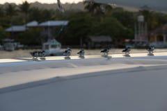 Mali ptaki na panelu słonecznym Obraz Royalty Free
