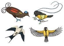 Mali ptaki raj, stajni dymówka, martlet, parus lub titmouse, Królewiątko Saxony w Nowej gwinei Egzot tropikalny royalty ilustracja