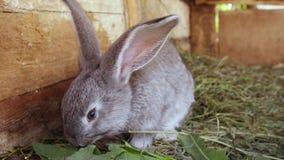 Mali różni barwioni króliki w klatce Jedzą świeżej trawy zbiory wideo