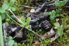 Mali rożki w lesie zdjęcie stock