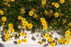 Mali słoneczniki zdjęcie royalty free