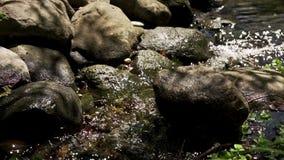 Mali strumieni przep?ywy nad kamieniami w?r?d ?wie?ego lata zdjęcie wideo