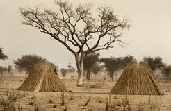 Mali, West Africa - Peul village and typical mud buildings. With barns for cereals, Fulani popolations Stock Photo