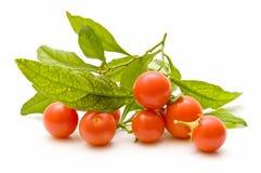 mali wiązka pomidory Obraz Royalty Free