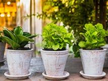 Mali ziele w plantaci Fotografia Stock