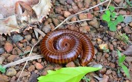 Mali zwierzęta w ogródzie Zdjęcie Stock
