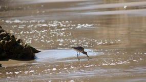 MALIBU, СОЕДИНЕННЫЕ ШТАТЫ - 9-ОЕ ОКТЯБРЯ 2014: Красивый и романтичный пляж положения El матадора в южной Калифорнии стоковое изображение rf