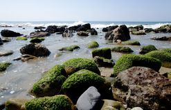 Malibu Beachscape 4. Landscape of Malibu Beach in California showing algae covered rocks Stock Photography