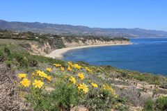 Malibu. California, United States - Pacific coast view in Malibu. Point Dume State Beach with Giant Coreopsis (Giant sea dahlia) flowers Stock Photos