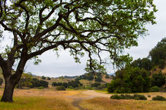 Malibu Creek State Park. Oak tree sunset Royalty Free Stock Photos