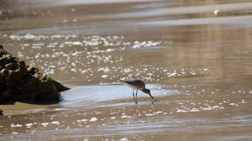 MALIBU FÖRENTA STATERNA - OKTOBER 9, 2014: Härlig och romantisk El-matador State Beach i sydliga Kalifornien Royaltyfri Bild