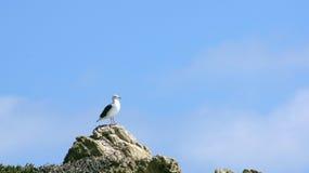 MALIBU, STATI UNITI - 9 OTTOBRE 2014: Bello ed EL romantico Matador State Beach in California del sud Fotografia Stock Libera da Diritti