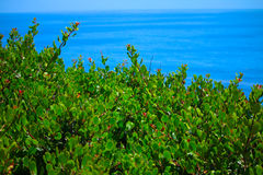 Malibu växter royaltyfri foto