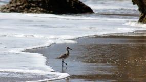 MALIBU, VERENIGDE STATEN - OKTOBER 9, 2014: Mooie en romantische Gr Stierenvechter State Beach in Zuidelijk Californië Stock Foto's