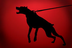 The malicious doberman dog Stock Photography