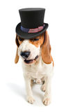 Malicious dog in a hat of uncle Sam. White background Royalty Free Stock Photos