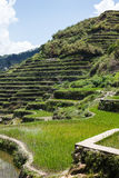 Maligcong rice terraces, Mountain Province, Philippines. Maligcong rice terraces of the municipality in Mountain Province, Philippines Stock Photo