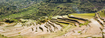 Maligcong rice terraces of the municipality in Mountain Province, Philippines. Maligcong rice terraces of the municipality in Mountain Province Royalty Free Stock Image