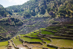 Maligcong rice terraces of the municipality in Mountain Province, Philippines. Maligcong rice terraces of the municipality in Mountain Province Stock Photo
