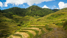 Maligcong Rice Terraces View from Trail. Rice Terraces of the mountain provinces in the Philippines Royalty Free Stock Photography