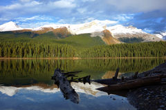 Maligne lake, Jasper national park, Canada Royalty Free Stock Images