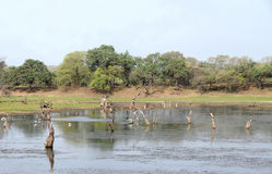 Malik talab在区域Ranthambore国家公园4  免版税库存照片