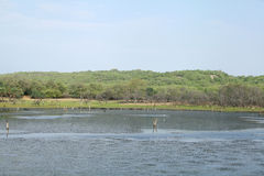 Maliktalab in Zone 4 Nationalparks Ranthambore Lizenzfreie Stockfotos