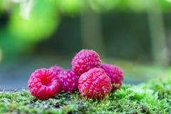 malina Świeże organicznie jagody z liśćmi makro- Obrazy Stock