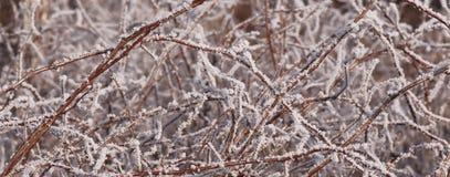 Malinka w zimie Zdjęcia Stock