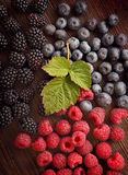 Malinki i jeżynowe czarne jagody Zdjęcie Royalty Free