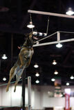 Malinois belga che salta per un respingente fotografia stock