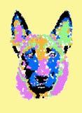 Malinois Dog Art stock photography